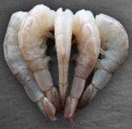 Šaldytos baltakojės krevetės