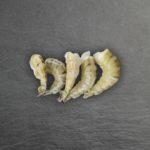 Šaldytos nevirtos didžiosios tigrinės krevetės